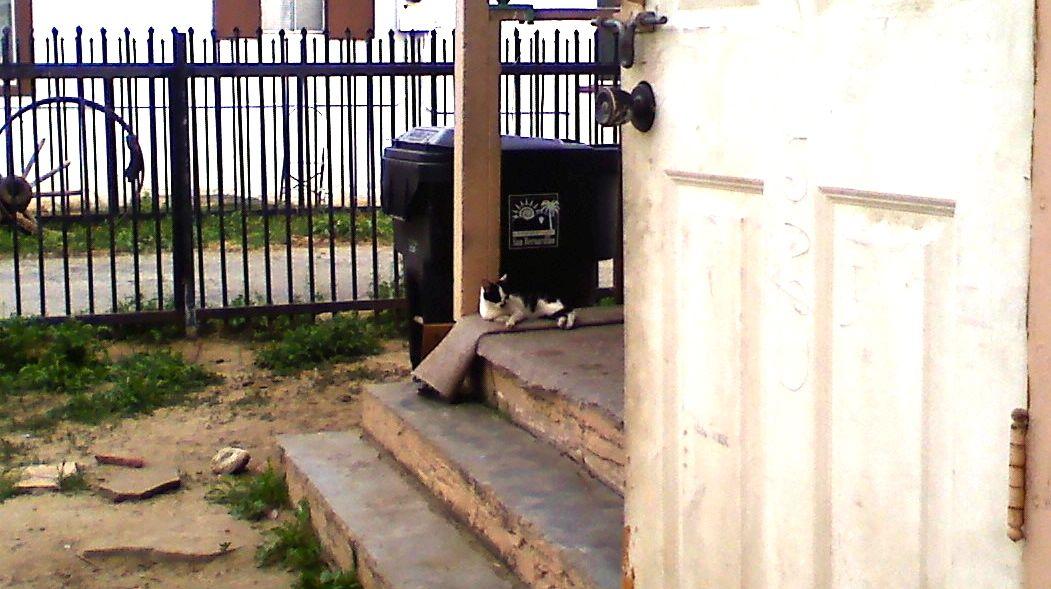 Junkyard San Bernardino >> DONATIONS | Kitty Meow Cat Rescue