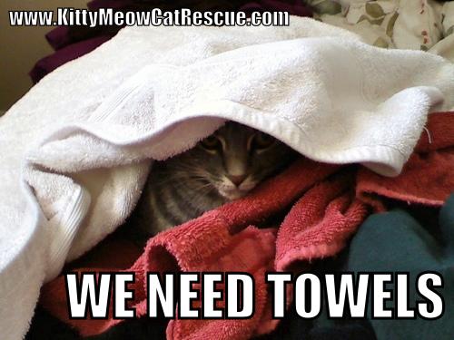 Towels Meme